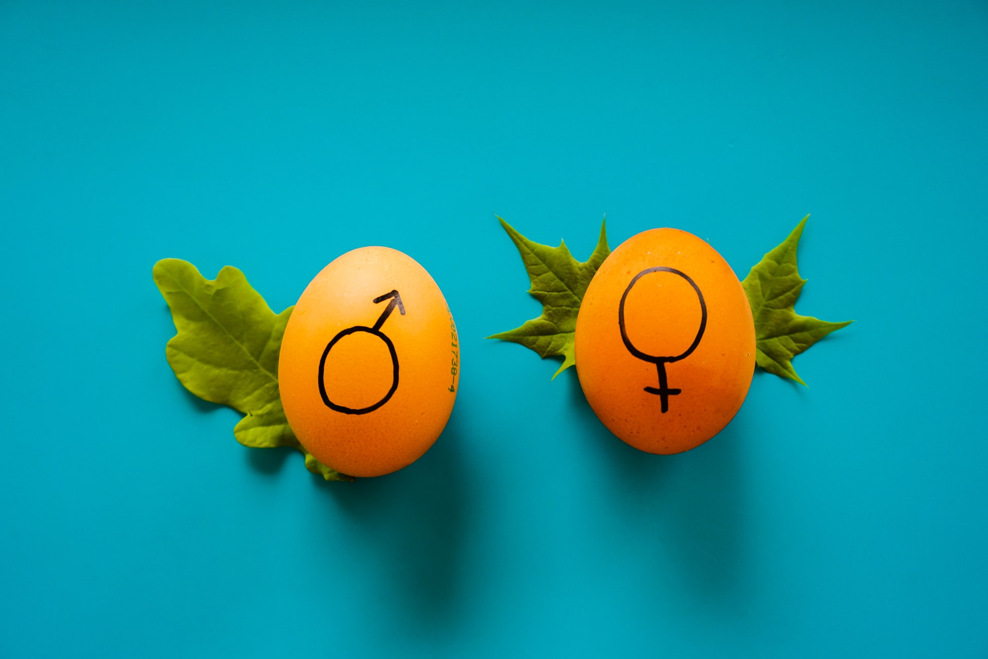 LGBT Lawyers Gender Reassignment 2